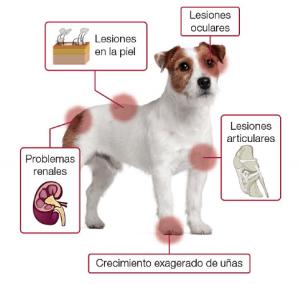 leishmaniosis-en-perros_opt-1-1-1